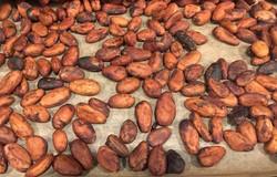 Medium fill 949fac2067 beans
